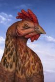 Rooster-Handimals-Guido-Daniele-566x848